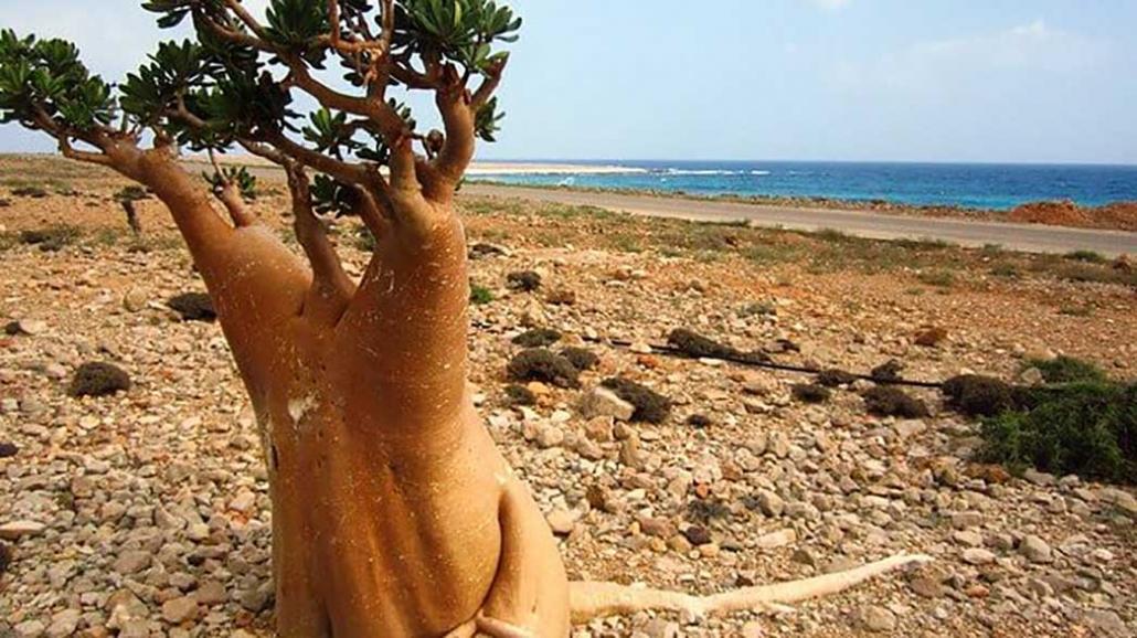 Socotra lo Yemen che non ti aspetti 3