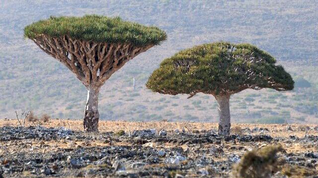 Socotra lo Yemen che non ti aspetti 4