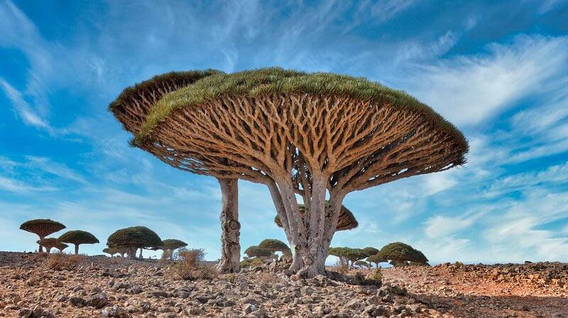 Socotra lo Yemen che non ti aspetti