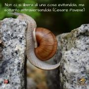 La frase di Cesare Pavese