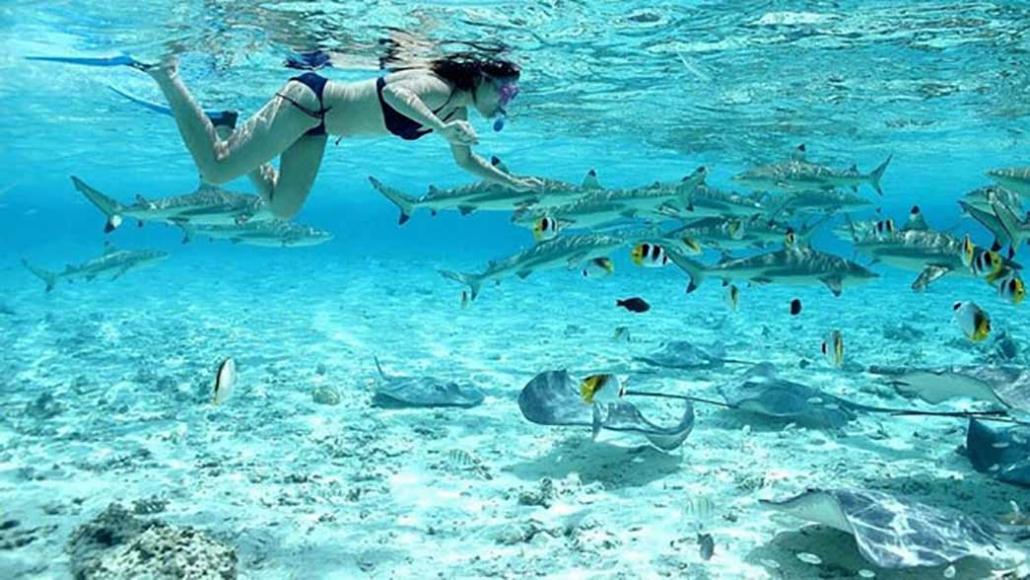 Nuotare con gli squali